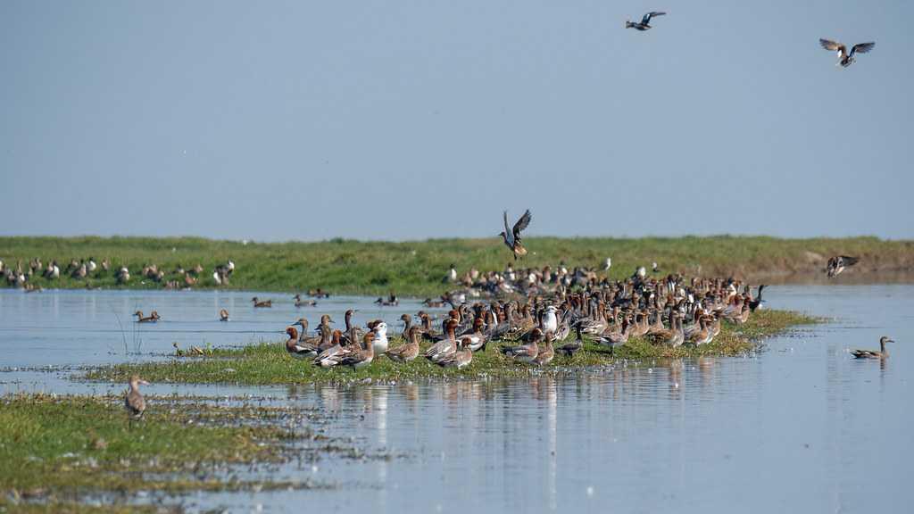 Nalbana Bird Sanctuary