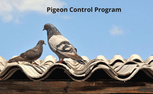 Pigeon Control Program